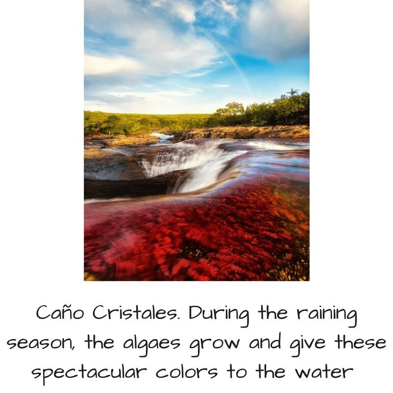 Caño Cristales trip to Colombia