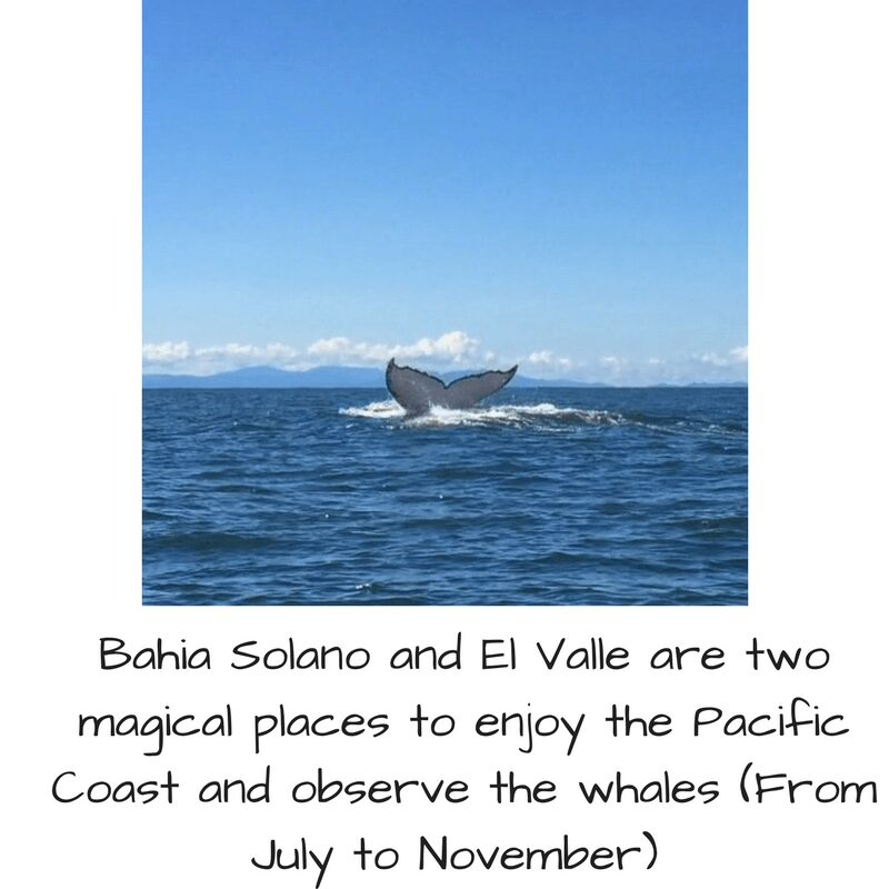Whale Watching Pacific Coast Trip to Colombia