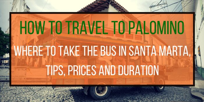 Palomino Bus: Where, When and How