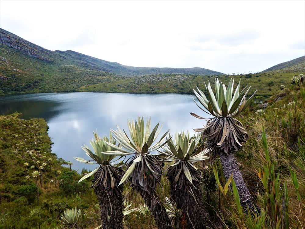 Parc national Chingaza, à quelques heures de Bogotá, Grandes villes de Colombie
