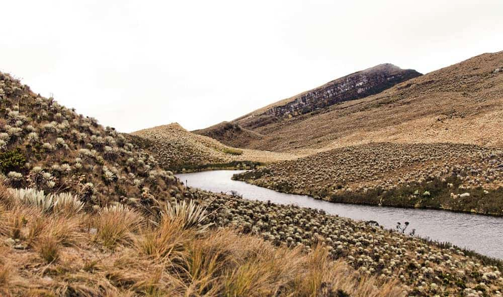 Paramo in The national Park Sumapaz