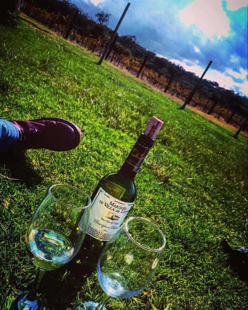 Vineyard Villa de Marques