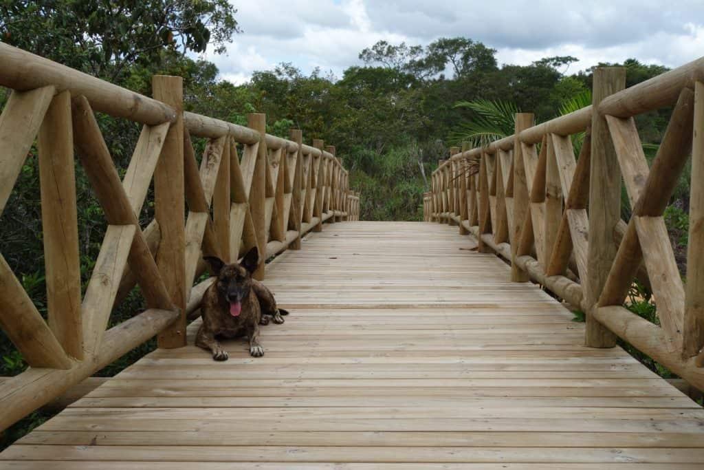 The Bridge above Cano Escondido