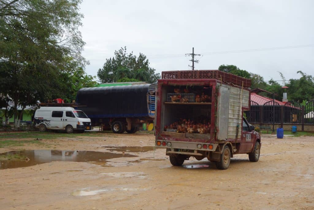 A chicken Truck in La Macarena