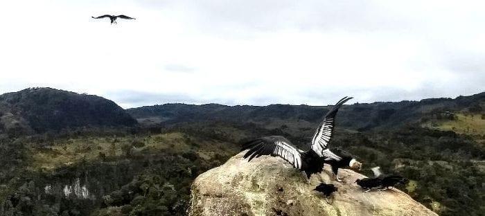 Paramo & Condor