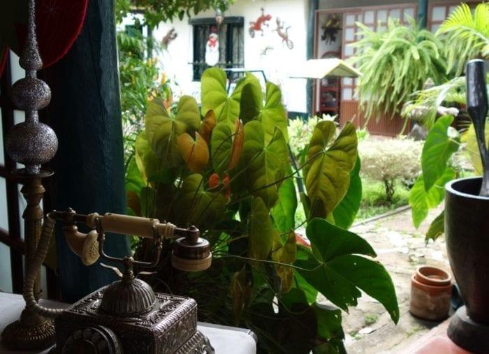 Guacana