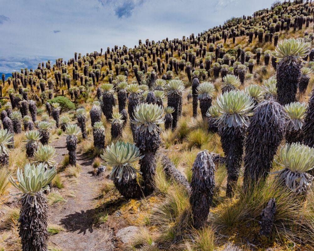 Mongui Oceta Paramo 1 week in Colombia itinerary
