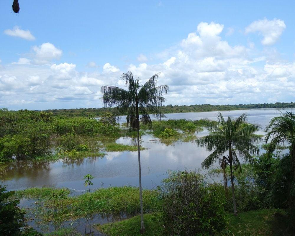 Palmari Amazon