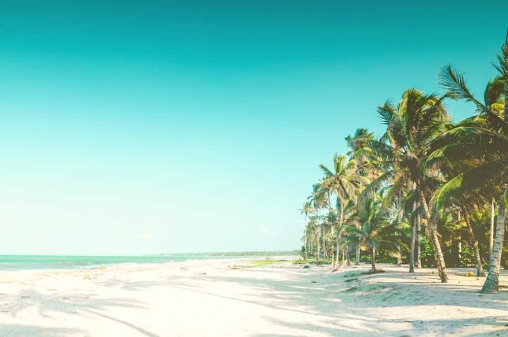 Beach Palomino