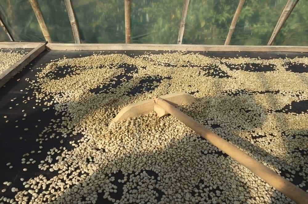 finca de cafe