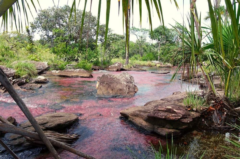 Caño Sabana San Jose del Guaviare
