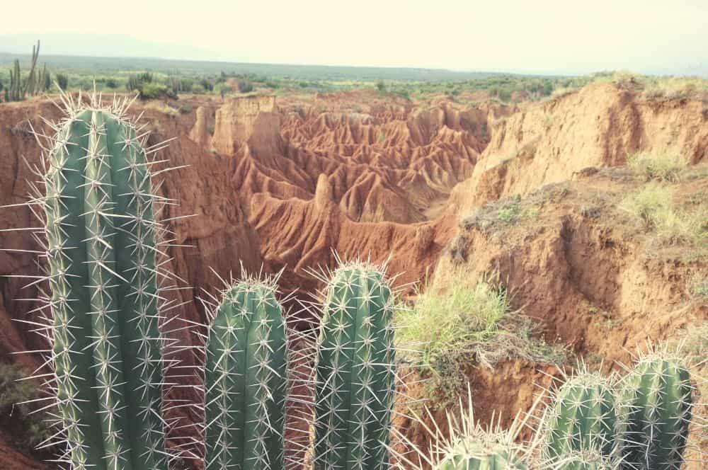 Cuzco cactus Tatacoa desert