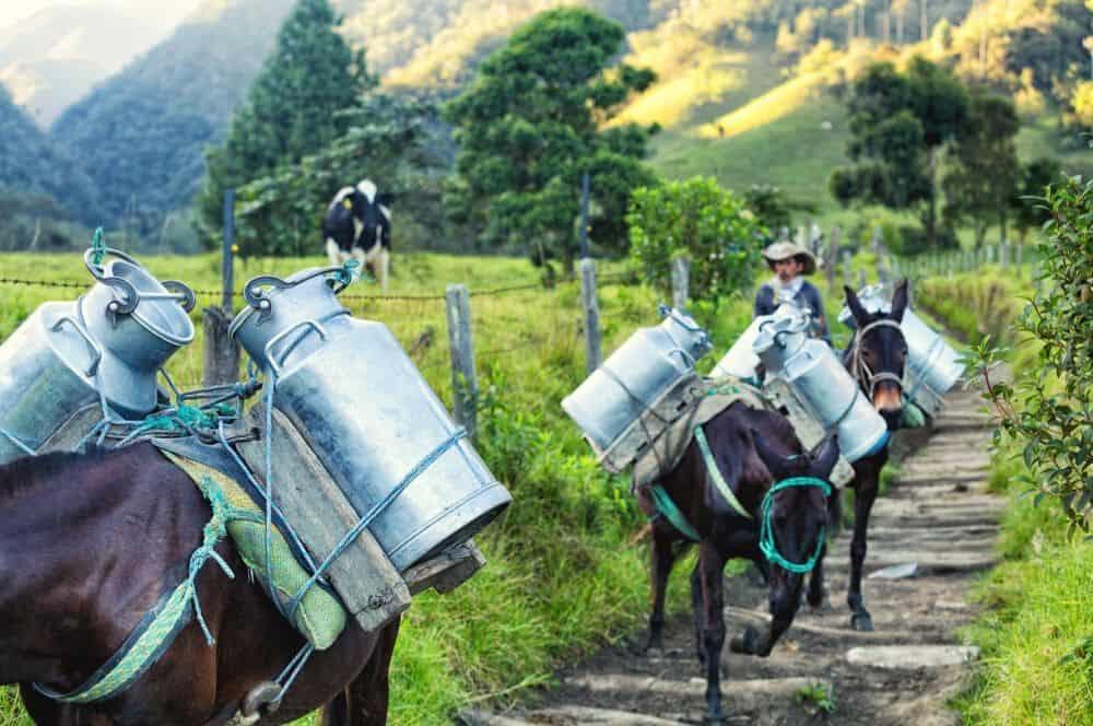 Donkey milk salento