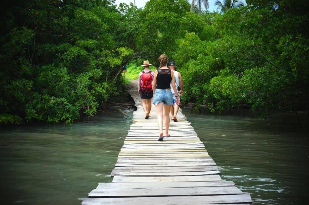 Isla Mucura Mangroves
