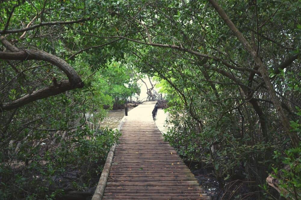 sla Mucura manglares San Bernardo