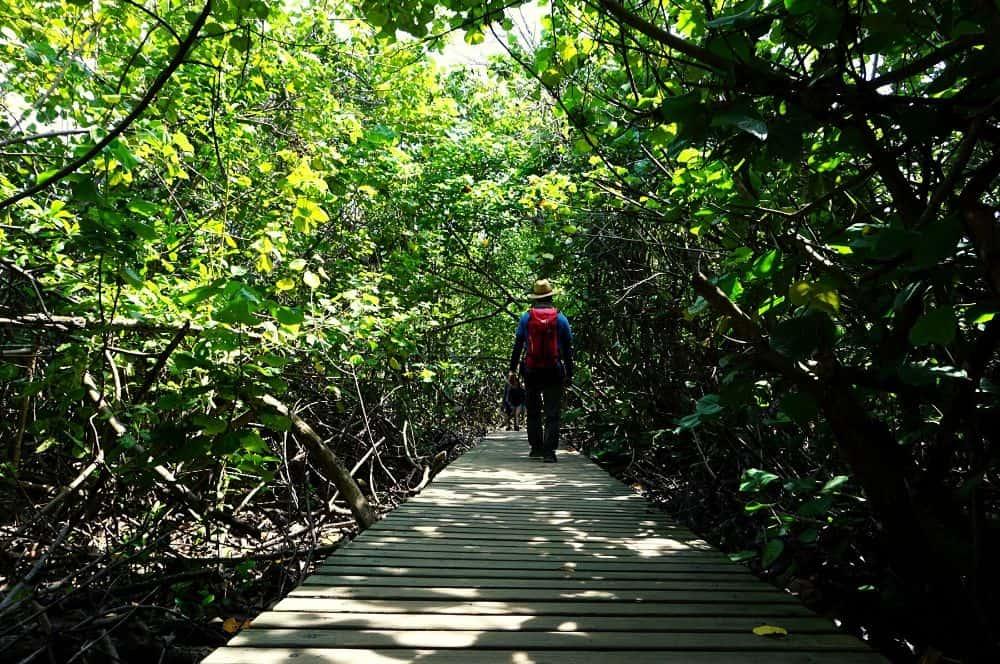 Mangroves Tayrona