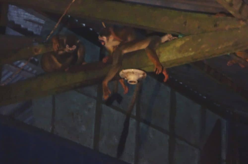 Monkeys Puerto nariño amazon