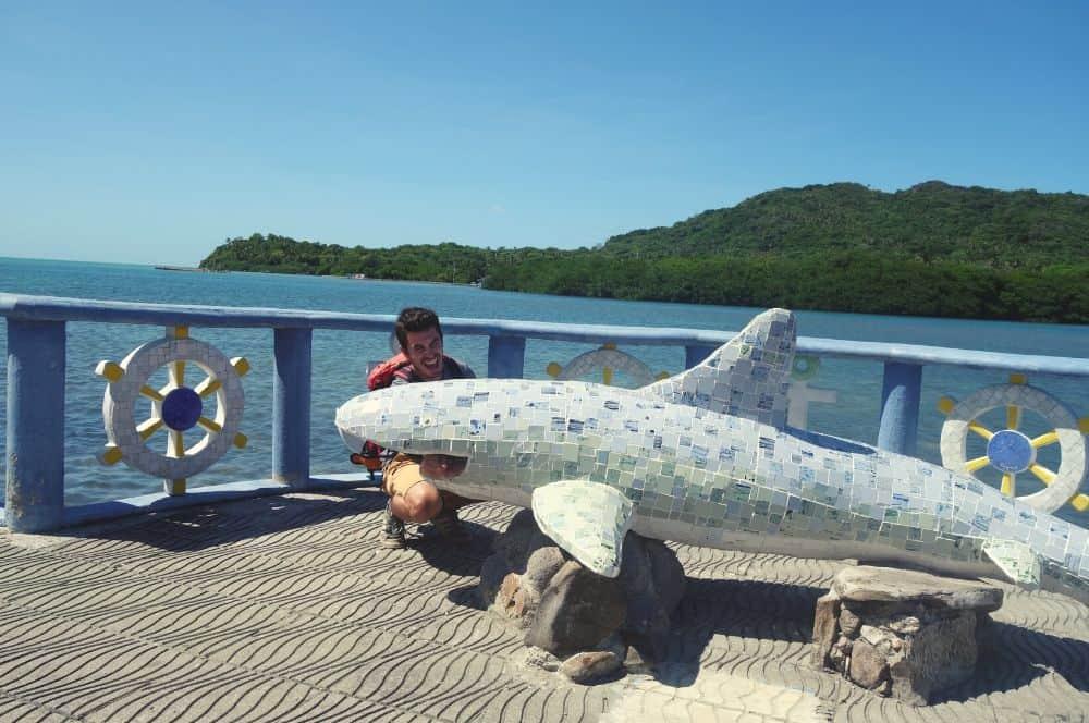 Shark Providencia