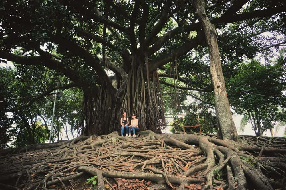 Tree Cali