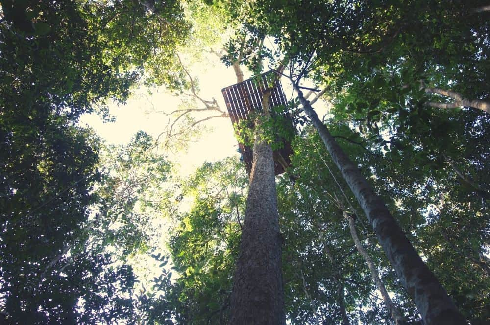 Tree house jungle Leticia