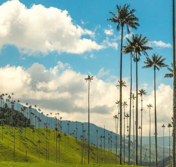 Salent & Valle de Cocora