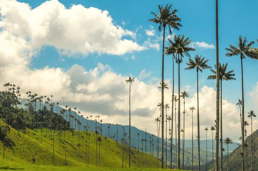 Valle de Cocora salento