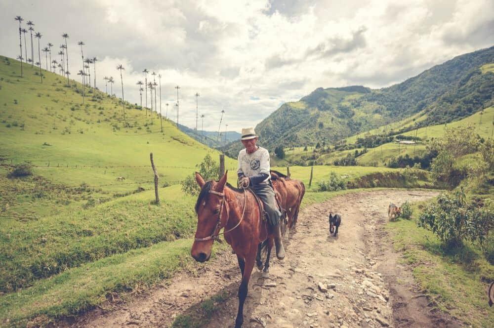 Valle de cocora horse Salento