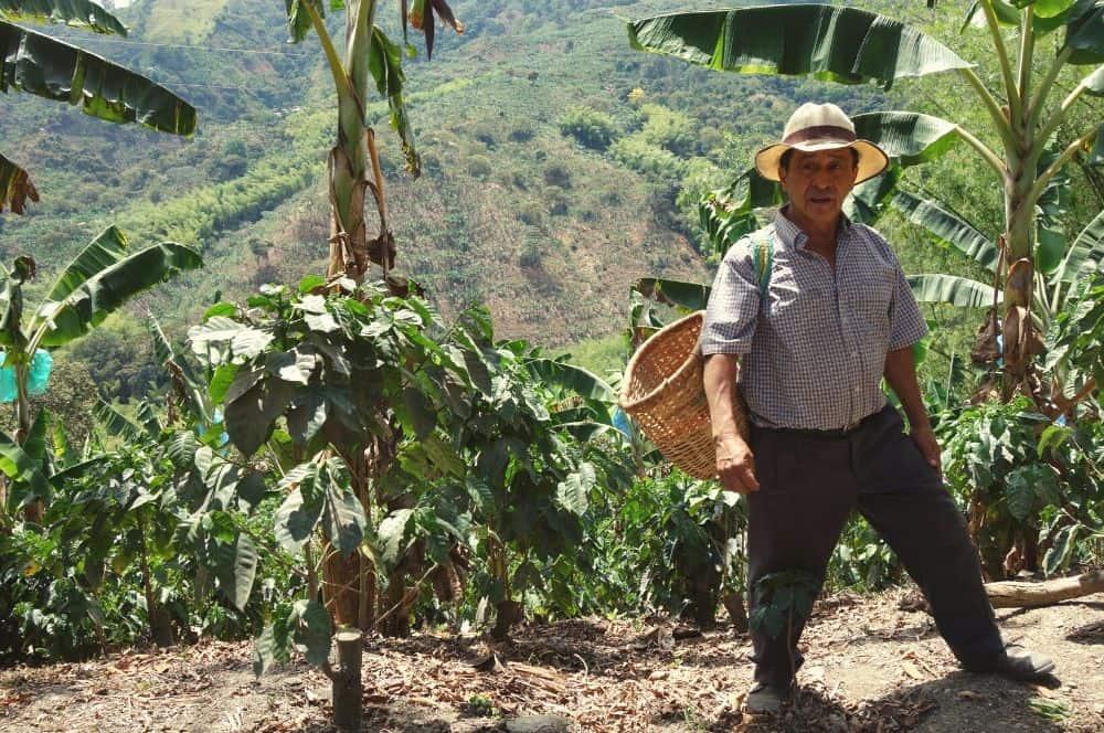 coffee farmer pijao