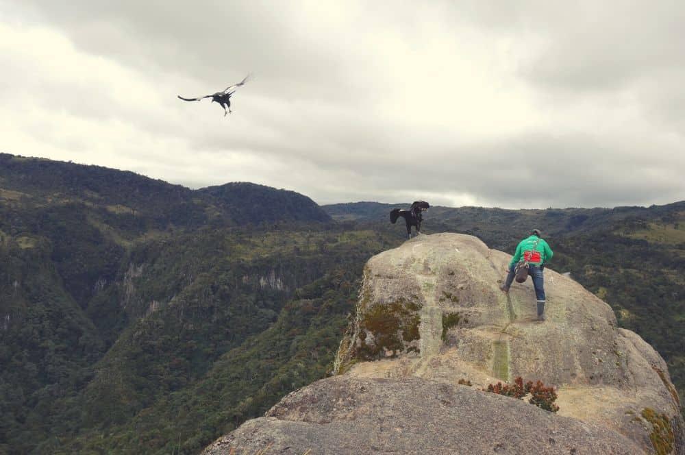 Condors popayan