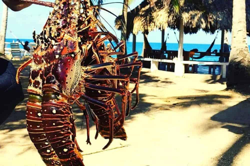 Lobster la playita Isla Fuerte
