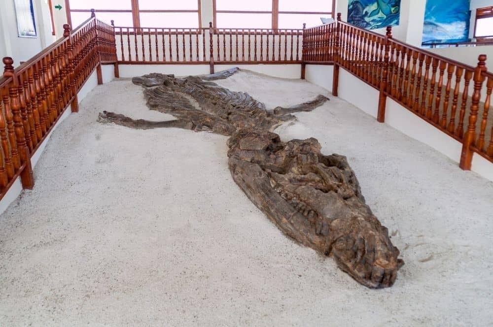Villa de Leyva - Fossile (1)