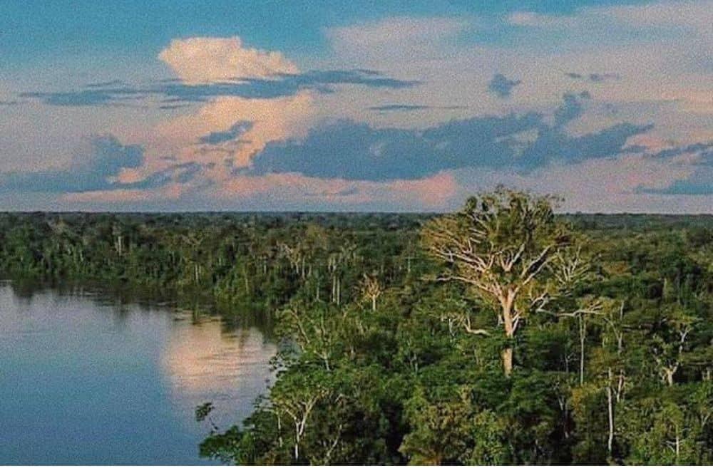 Ceiba amazon Palmari (1)