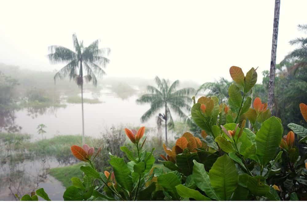 Fog amazon Palmari