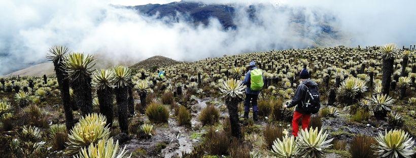 Los Nevados Colombia hike Frailejones