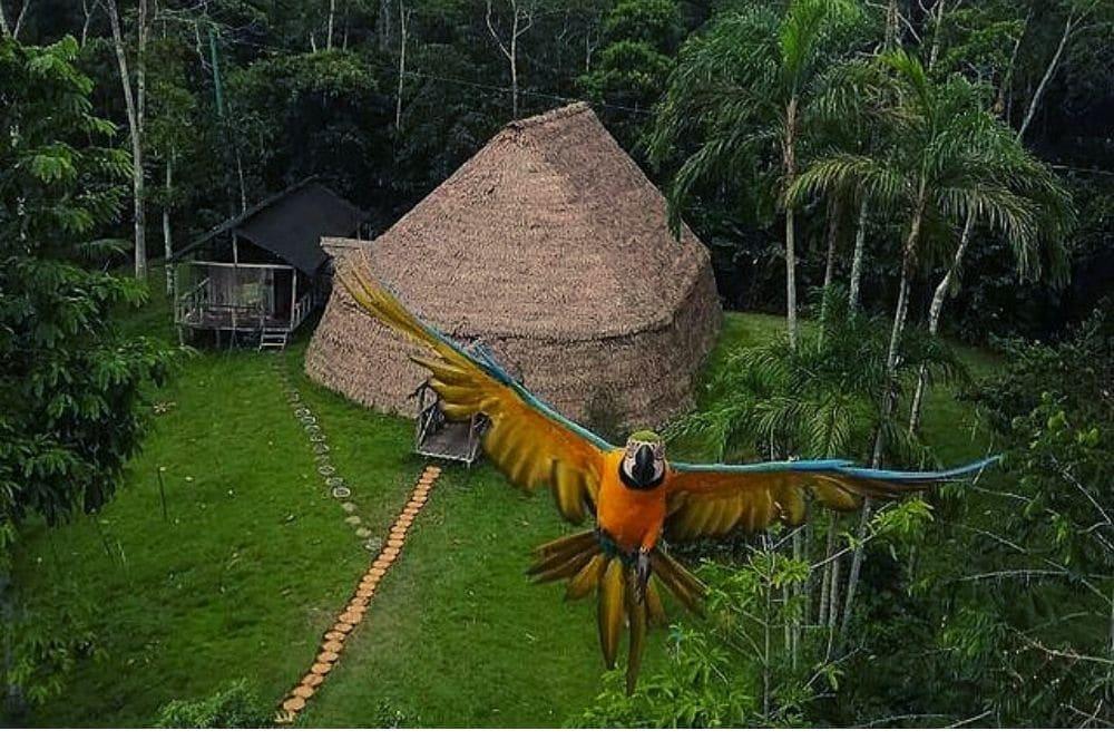 Reserva Palmarí Amazonas