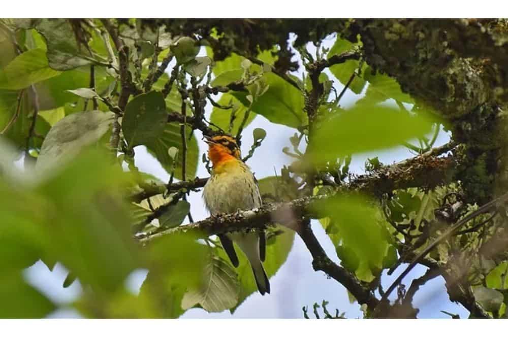 Avisamiento de aves Villa de Leyva