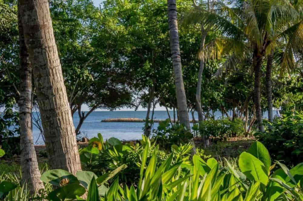 Bahia Barbacoa Credit Playa Manglares (1)